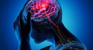 קסטיצין הגן מפני פגיעה עצבית ועיכב את מסלול TLR4 / NF-κB לאחר חסימת עורק מוחי אמצעי בחולדות